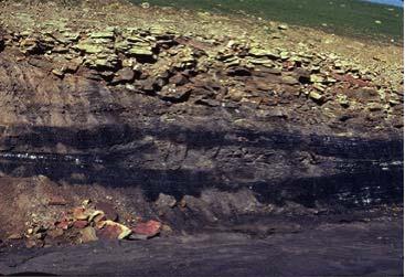 Palaeoenvironmental reconstruction of Hüsamlar coal seam, SW Turkey