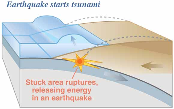 Surviving A Tsunamilessons From Chile Hawaii And Japan