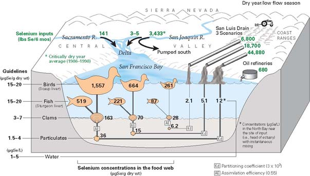 Linking selenium sources to ecosystems san francisco bay for Sf bay fishing report