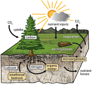 Usgs fact sheet 2009 3078 unearthing secrets of the forest for Soil as a system